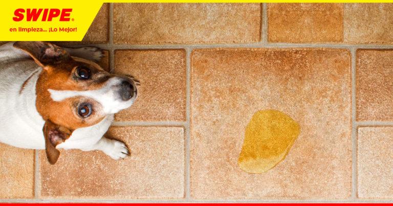 Consejos Swipe: ¿Cómo eliminar los malos olores del patio con Swipol?
